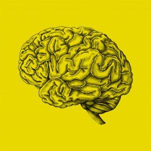 Cerveau-vignette
